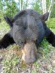 SaskAdrenaline Bear Hunt121